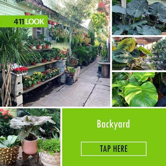 Mickey Hargitay Plants